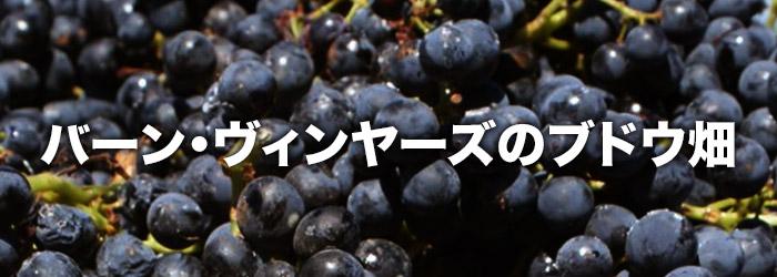バーン・ヴィンヤーズのブドウ畑