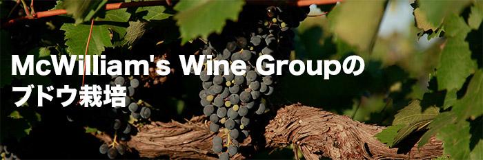 McWilliam's Wine Group のブドウ栽培