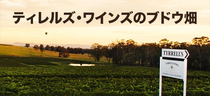 ティレルズ・ワインズのブドウ畑