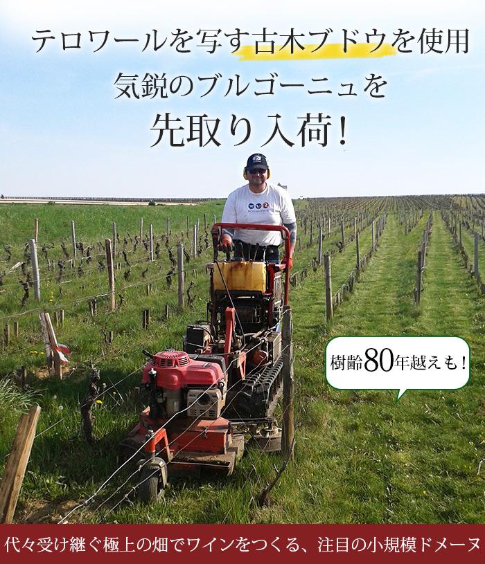 代々受け継ぐ極上の畑でワインをつくる、注目の小規模ドメーヌ