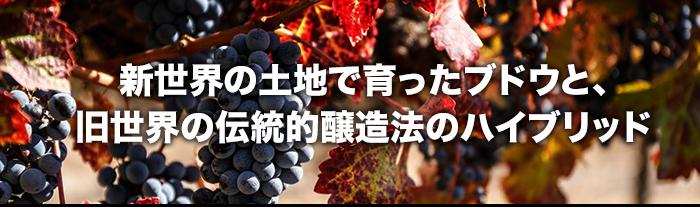 新世界の土地で育ったブドウと、旧世界の伝統的醸造法のハイブリッド