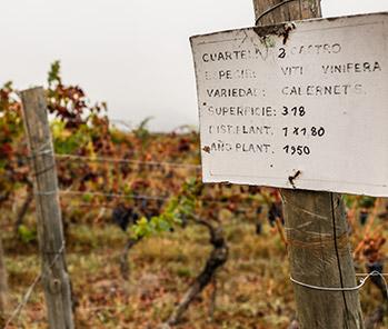 「アルト・マイポ」に存在する赤ワイン最上のテロワールの一つ、DOピルケ(PIRQUE)