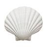 貝殻(ミネラル)