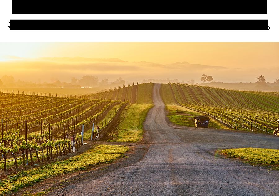 アメリカのカベルネ・ソーヴィニョン ニューワールドワインの代表格。数々のカルトワインが生まれる地。