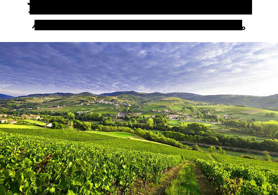 フランスその他のピノ・ノワール バランスが良く、掘出し物が多い隠れ銘醸地。