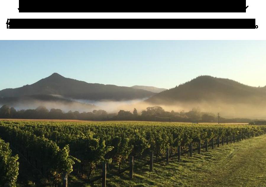 ニュージーランドのピノ・ノワール 優れたテロワールと先進的な醸造技術により急成長した産地。
