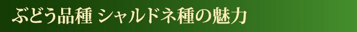 瓶内二次発酵方式(シャンパーニュ製法)