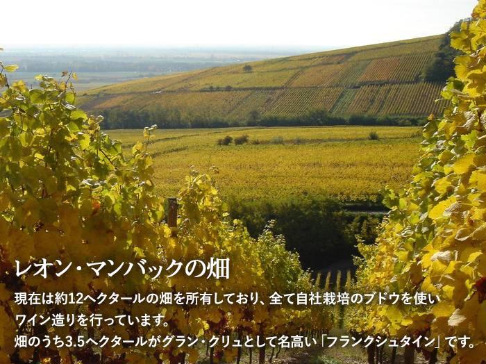 レオン・マンバックの畑