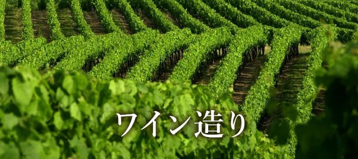 ブドウ栽培