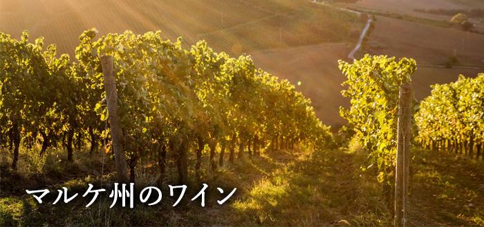 マルケ州のワイン