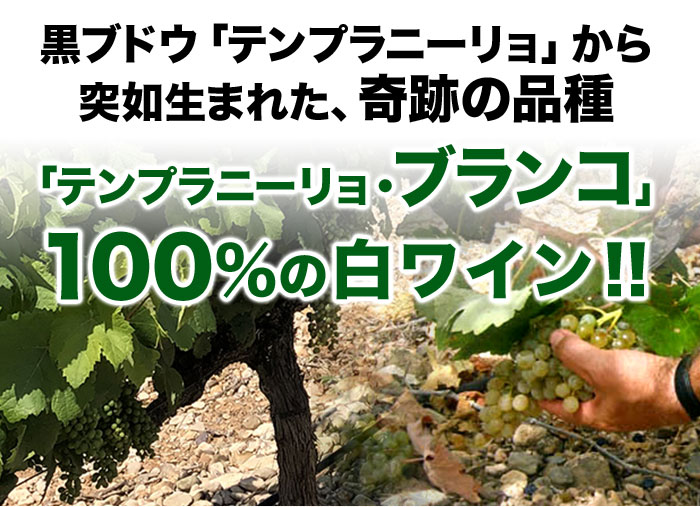 黒ブドウ「テンプラニーリョ」から突如生まれた、奇跡の品種「テンプラニーリョ・ブランコ」100%の白ワイン!!