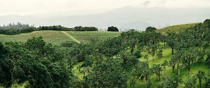 ナパヴァレー畑